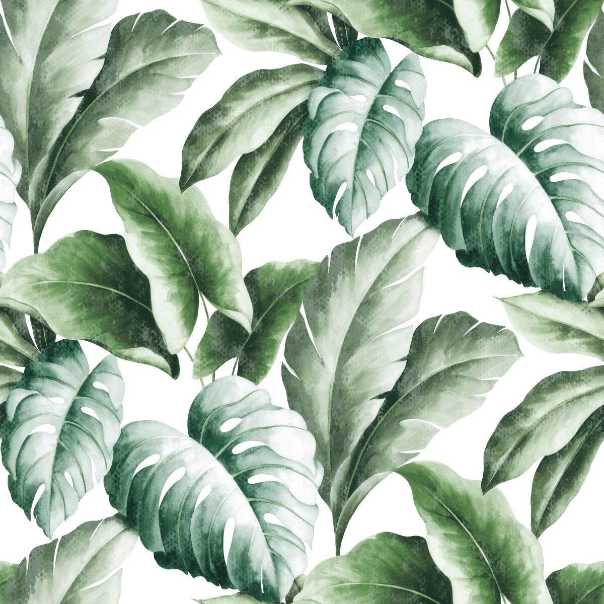 Carta da parati Foglie tropicali verde, 53 cm x 10 m - 2